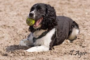 Kursusplan hund