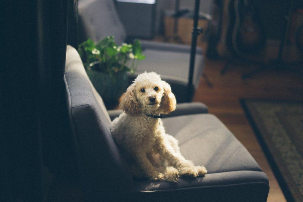 Hundetræning unghund