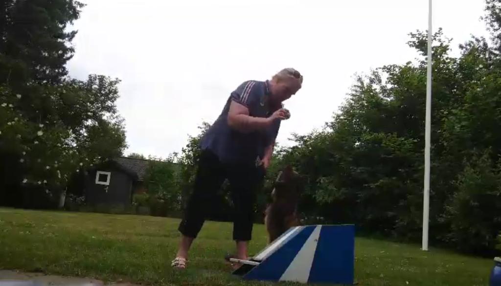Flyball, Agility, Hundetræning